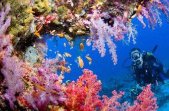 кораллы и водолаз