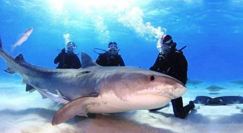 фото с живой акулой